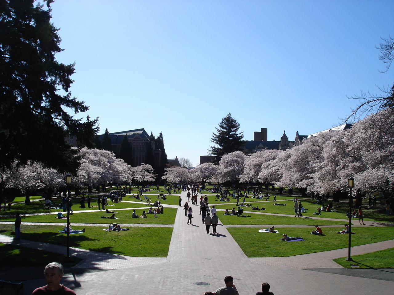 ワシントン大学の桜 Quadという左右対称の庭です。 宮殿の庭みたいですね。 ワシントン大...