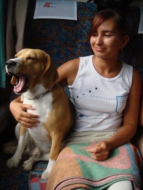 犬も乗客 (犬も乗客です。眠そ~ぅ。) (アウシュビッツ行き小型バス。地元の人も... ワルシャ